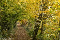 Herbst am Hallwilersee #wandern #Schweiz #Aargau #See