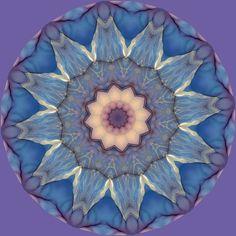 fleur de l'esprit ; flor da mente ; flower of the mind ; Blume des Geistes Mandala de Pierre Vermersch