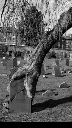 Old Cemetery.wow that tree looks like either a hand and arm grabbing the gravestone, or a giant snake trying to swallow it! Cemetery Monuments, Cemetery Statues, Cemetery Headstones, Old Cemeteries, Cemetery Art, Graveyards, Abandoned Places, Belle Photo, Creepy