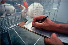 """La Confederación de Sociedades Científicas de España (COSCE) ha presentado hoy en Madrid el Acuerdo de transparencia sobre el uso de animales en experimentación científica (PDF), un documento con el que se conjuran para defender el uso de modelos animales y contrarrestar la información negativa sobre estas prácticas. El informe, en el que también colabora laAsociación Europea de Animales de Experimentación (EARA), señala que """"la investigación con modelos animales ha supuesto un gran avance…"""