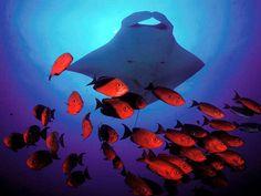 Scuba Diving Mozambique
