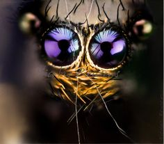 Close up of spider eyes