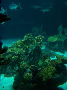 Pt. Defiance Aquarium - Tacoma, WA