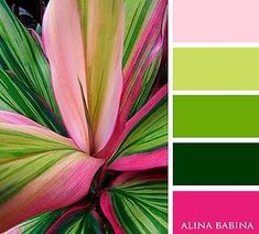 Bright, bold, beautiful and visually appealing aesthetics bedroom green Creator Colour palette