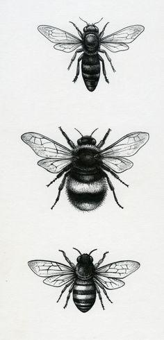 Lisa alderson - la - bees tattoo insect tattoo, bee tattoo и Sun Tattoos, Small Tattoos, Bee Drawing, Bee Images, Tattoo Zeichnungen, Butterfly Wall Art, Bee Art, Nature Illustration, Piercing Tattoo