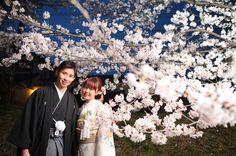 Cherryblossoms, KYOTO prefecture