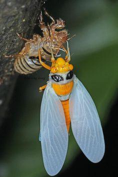 'Amazing Insects!' - https://fbcdn-sphotos-e-a.akamaihd.net/hphotos-ak-ash4/302761_451475834888804_1347592314_n.jpg