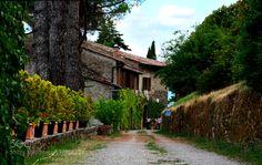 There the home Nei pressi del Castello di Romena nel territorio comunale di Pratovecchio-Stia. Siamo in Casentino