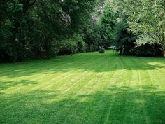 Optimizing irrigation schedules: when and how much to water your lawn for maximum water efficiency