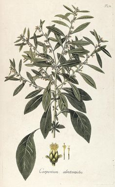 n225_w1150 by BioDivLibrary, via Flickr