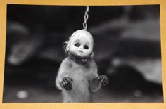 WEIRD Freaky Circus Monkey VINTAGE PHOTO Strange Creepy Bad Pic ODD Bizarre X78 in Collectables, Photographic Images, Antique (Pre-1940) | eBay