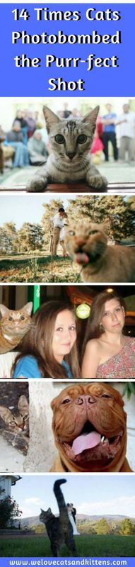 We all know that cats like attention, and as you can see from these photobombing felines, come what may, they'll do anything to get it! #cats #photooftheday