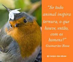 Animais inspiram ternura...