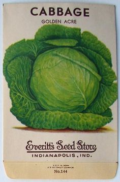 EVERITT'S SEED STORE,  Cabbage 144, Vintage Seed Packet