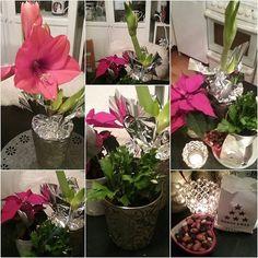 JOULU AIKA...KOTI&SISUSTUS Minun KOTI&TYYLIÄ. Kukkia, Kynttilöitä ja Herkkuja. RUOKA&JUOMAT myös tärkwitä. Nähdään HYMY. BLOGISS Infoa...HYMY #joulu #koti #sisustus #tyyli #idea #vinkit #blogi #kukat #joulukuu #joulukukat #jouluvalmistelut #ihana ❤☺