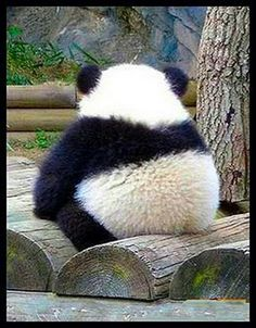 "Panda, ""does this make my butt look big""? Lol"