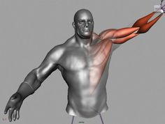 Maya tutorial: Rigging a muscle system