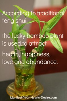 http://zti.me/oKx  #Feng Shui Tip of the Day  #Lucky #Bamboo Plant