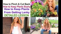 How to Pinch & Cut Back   How to Keep Plants Bushy   How to Keep Plants ... Petunia Care, Wtf Funny, Funny Memes, Trailing Petunias, Peony Care, Rivamika, So Many Questions, Beautiful Flowers Garden, Spring Fever