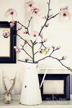 Magnolia branch for early spring colour and a simple large scale arrangement Magnolia Branch, Magnolia Farms, Magnolia Homes, Ikebana, Deco Pastel, Arte Floral, Planting Flowers, Floral Arrangements, Beautiful Flowers