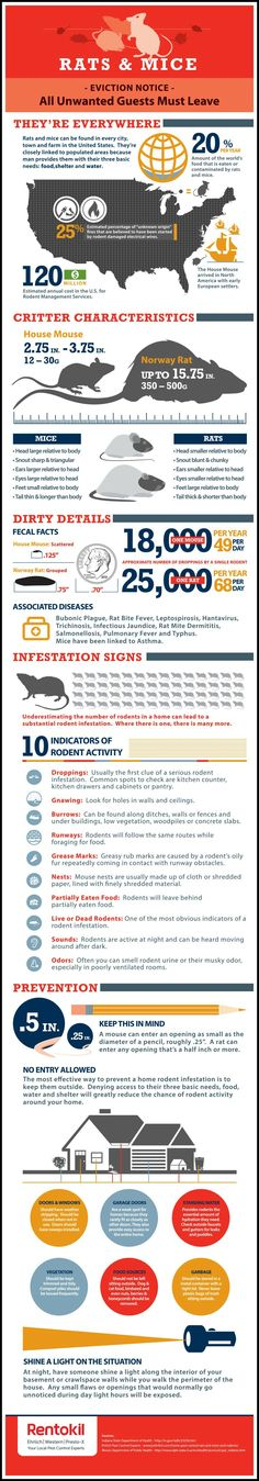 Rodent Infographic: How To Keep Rats and Mice Out of Your Home