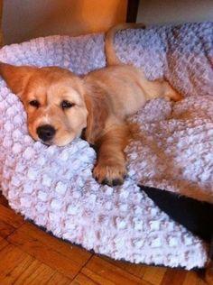 Someones sleepy!