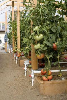 1000 Images About Mittleider Gardening On Pinterest