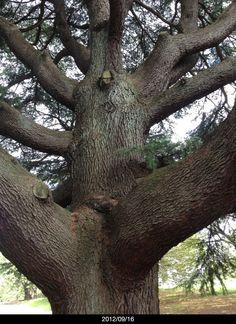 A tree in Shinjuku Gyoen park.