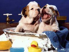 Perros bañándose