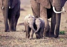 Oh they're so cute!!! They're holding trunks!! :D