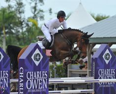 SOLD----Ceron HS: Show Jumping Prospect for Sale and Hyperion Stud Warmbloods and Sport Horses
