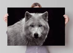 Poster Wolf | 91.5x61 cm Wolf Poster, Husky, Animals, Wolves, Animales, Animaux, Animais, Husky Dog, Animal