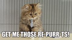 New party member! Tags: cat office working tie pun reports office life necktie