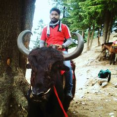 I met an aged uncle when I was wandering in Shimla.  We travelled together across Kufri and Lakkad bazar. He was 70 years old and traveling alone.  He was so energetic that he insisted me to ride on this bull. And he captured this image for me. He will always be there in my memories.  #me #traveling #india #bull #ride #rider #guns #my #myloves #mylife #beautiful #amazing #wanderlust #instatravel #wanderer #cap #life #moment #memories #red #mountains #nature #naturelovers #style