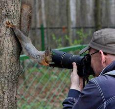 Squirrel investigating