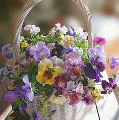 Absolutely Love the sheer simple joy of violas and pansies. This cheerful mixed basket shows why. Amazing Flowers, My Flower, Fresh Flowers, Spring Flowers, Beautiful Flowers, Cactus Flower, Exotic Flowers, Purple Flowers, Basket Flower Arrangements