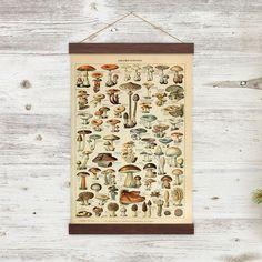 Vintage Mushroom Illustration Canvas Print W/ Wooden Poster Hanger - Eza124