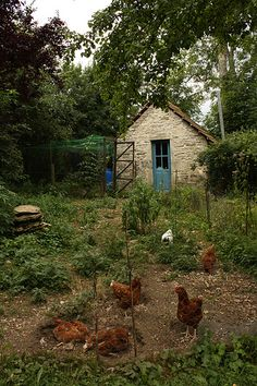 tiny stone garden cottage & chickens