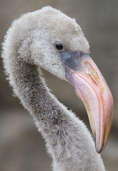 ... Tropical Birds, Exotic Birds, Colorful Birds, Pretty Birds, Beautiful Birds, Animals Beautiful, Flamingo Art, Pink Flamingos, Flamingo Beach