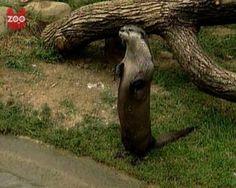Otter Is an Artiste! - April 21, 2012