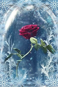 Beauty and the Beast gif the rose Gifs, Good Night Gif, Gif Disney, Free To Use Images, Rose Of Sharon, Beautiful Gif, Disney Beauty And The Beast, Gif Pictures, Disney Wallpaper