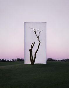 Myoung Ho Lee - Tree - Fotografie di alberi isolati dal loro contesto
