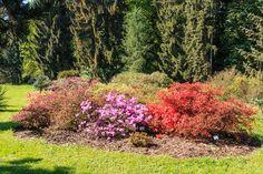 Czech Republic, Prague, Park, Plants, Parks, Planters, Bohemia, Plant, Planting