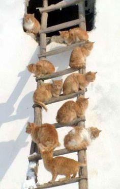 Kitty Ladder