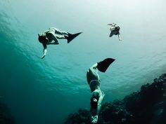 Pra quem é ligado no mundo Outdoor como nós aqui do site, nadar com baleias faz parte dos sonhos de muita gente. No Brasil, existe uma lei que proibe nadarmos com cetáceos (lê-se golfinhos e baleias), o que é muito legal, pois protege esses animais e garante uma reprodução tranquila...
