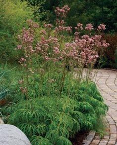 Zone Shade Garden Designs Html on