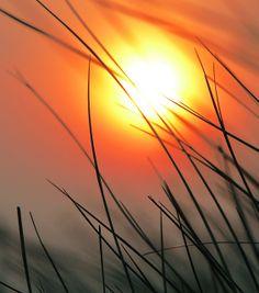 Tall grass setting sun