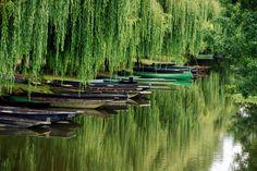 En barque, v�lo ou � pied, aventurez-vous au coeur des Marais de France. Havres de nature en bordure de littoral, � l'embouchure des fleuves ou dans les plaines, ils abritent bien souvent une faune et une flore remarquables.