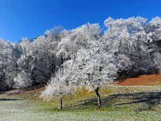 Original Nature Photography by Andreas Ender Digital Photography, Nature Photography, Buy Art, Paper Art, Saatchi Art, Original Art, Country Roads, Fine Art, Winter Landscape