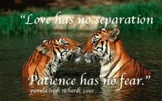 Tigers-Eye-to-Eye-Pamela-Quote-300x187.jpg (300×187)